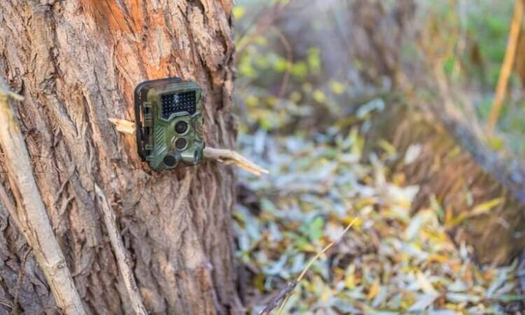 How To Set Up A Trail Camera