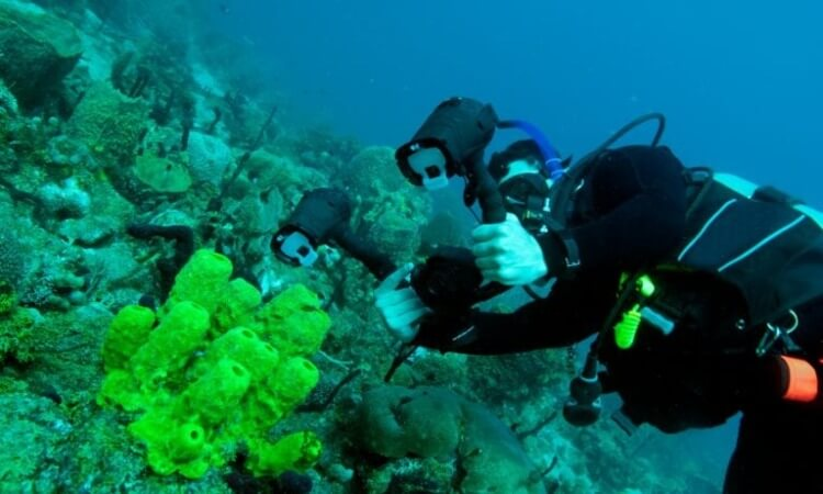 The 7 Best Cameras For Underwater Photography